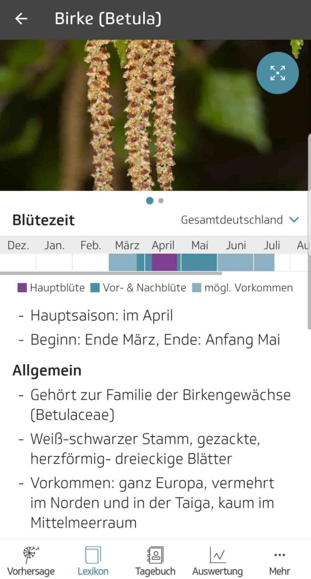 App des Monats Husteblume